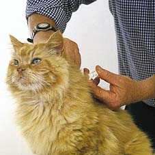 Importance of Microchipping Your Pet(s)